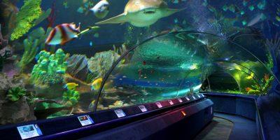 Экспозиция в океанариуме «Планета Нептун»