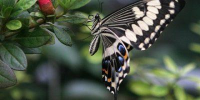 Экспозиция сада живых бабочек «Миндо»